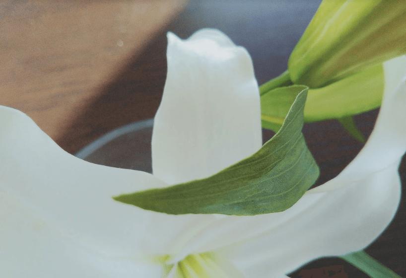 エミリオロバ カサブランカシリーズ 葉